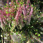Seizoensplanten herfst/winter